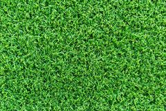 Grass field texture for golf course, soccer field or sports background concept design. Royalty Free Stock Photo