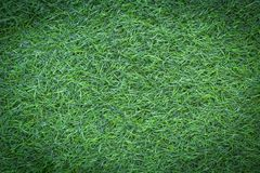 Grass field texture for golf course, soccer field or sports background concept design. Artificial grass royalty free stock photography