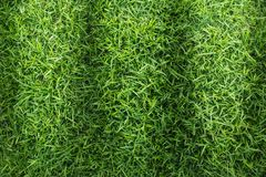 Grass field texture for golf course, soccer field or sports background concept design. Stock Images