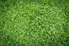 Grass field texture for golf course, soccer field or sports background concept design. Natural grass royalty free stock images