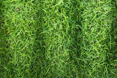Grass field texture for golf course, soccer field or sports background concept design. Natural grass royalty free stock image