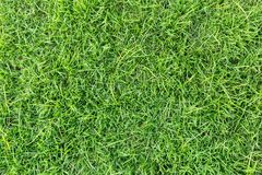 Grass texture or grass background. Green grass for golf course, soccer field or sports background concept design. Grass field texture for golf course, soccer Royalty Free Stock Photo