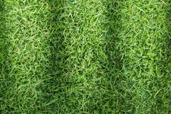 Grass texture or grass background. Green grass for golf course, soccer field or sports background concept design. Grass field texture for golf course, soccer Stock Image