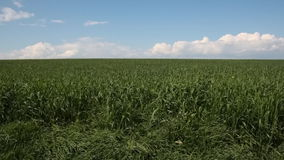 Grass field stock footage
