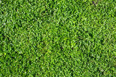 Grass Field Top View Royalty Free Stock Photos