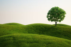 Grass field with a tree. 3d rendering of a green field with an elm tree Stock Image
