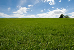 Grass field and trees. Horizontal color low angle image of freshly mowed green grass field with trees in distance and blue sky with clouds Stock Photo