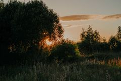 Grass Field and Trees during Sunset Stock Photos