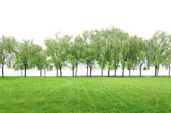 Grass field. Grass field and trees on  white background Stock Photography