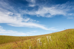 Grass field under blue cloudy sky Royalty Free Stock Image