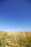 Grass field under blue sky Stock Photo