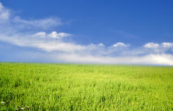 Grass Field Under Blue Sky. Stock Images