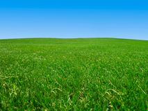 Grass field under blue sky stock photos