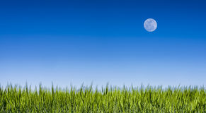 Grass field under a clear blue sky with a full moon Royalty Free Stock Photos