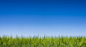 Grass field under a clear blue sky Stock Images