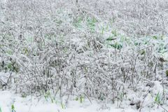 Grass field under a thin layer of snow. Qith some green grass coming out from it in a qinter day on italian hills Royalty Free Stock Image