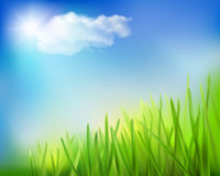 Grass field. Vector illustration. Royalty Free Stock Photos