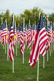 Grass Field of Veterans Day American Flags Waving in the Breeze. Royalty Free Stock Images