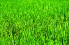 Grass field, vivid color Stock Photo