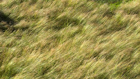 Grass and field Royalty Free Stock Image