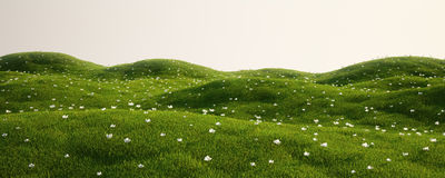 Grass field with white flowers. 3d rendering of a green field with white flowers Royalty Free Stock Photos