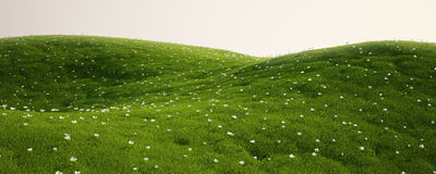 Grass field with white flowers. 3d rendering of a green field with white flowers Stock Photos