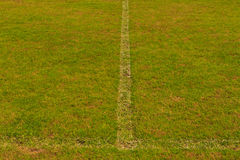 Grass field with white line Stock Photography