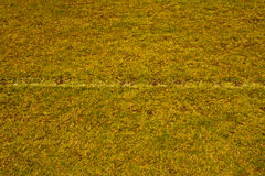 Grass field with white line. Green grass field with white line for game Royalty Free Stock Photography