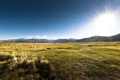 Grass field Stock Photos