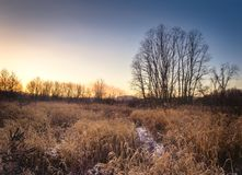 Grass field in winter Stock Images