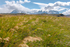 Grass fields blow in the wind - Torres del Paine - Chile Royalty Free Stock Photography