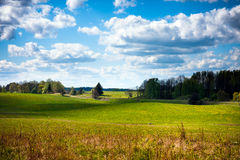 Grass fields, blue sky clouds. Field of green grass, trees and clouds over blue sky Royalty Free Stock Images