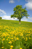 Grass fields with single tree Stock Photo