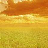Grass fields and sunset Royalty Free Stock Photo