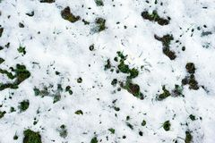 Grass filed covered in light snow. Grass filed covered in light first snow Stock Photo