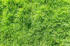 Grass filed nature background outdoor Royalty Free Stock Photography
