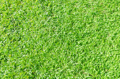 Grass filed nature background outdoor Royalty Free Stock Photos
