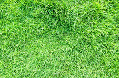 Grass filed nature background outdoor Stock Photo