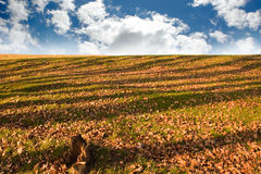 Grass field with striped shadows Stock Photography