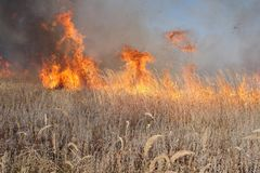 Grass fire Royalty Free Stock Photo