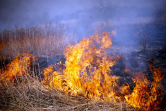 Grass fire Stock Photo