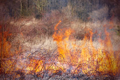 Grass fire Royalty Free Stock Photography