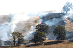 Grass Fire Stock Photography