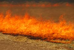 Grass Fire Stock Image