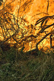 Grass fire. Grass and branches burn with intensity Royalty Free Stock Images