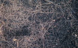 Grass fire burning Royalty Free Stock Image