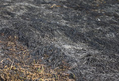 Grass after fire Royalty Free Stock Photography