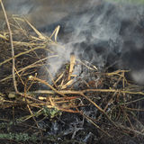 Grass In Fire. Detailed outdoor shot with selective focus Royalty Free Stock Photography