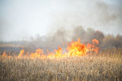 Grass fire. On a field Royalty Free Stock Photography