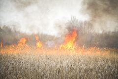 Grass fire. In a field closeup Royalty Free Stock Photo